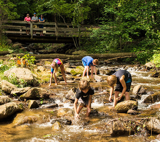 http://www.amicalolafallslodge.com/wp-content/uploads/2015/09/Amicalola-Falls-Adventure-Lodge-Packages-Specials-Promotions-Gold.jpg