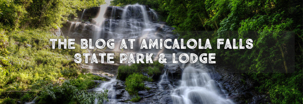 Blog Header Amicalola Falls