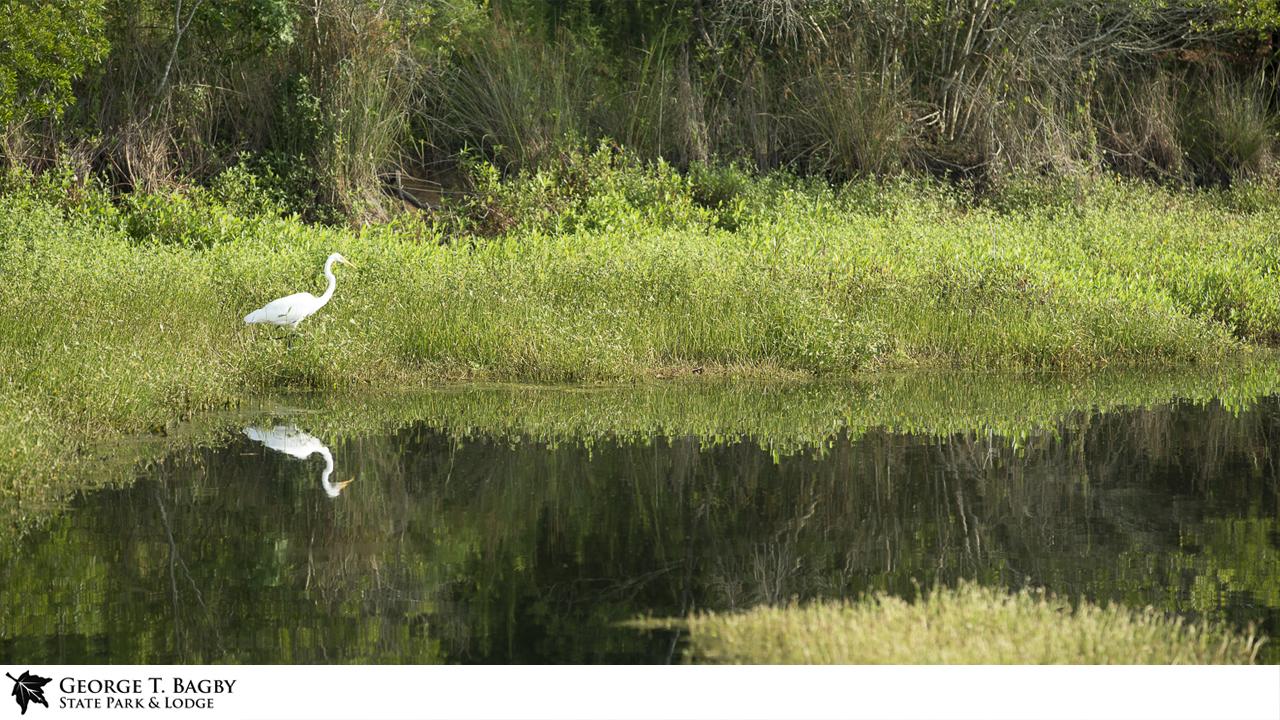 Bagby Wildlife Zoom Background